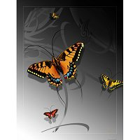 Lama Kasso Throw #0210-T, Large Butterfly on a Silver Transitioning to Black Background 48″x63″ Satin Throw Blanket