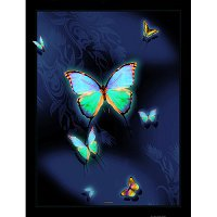 Lama Kasso Throw #542-T, Large Butterflies on a Dark Blue Transitioning to Black Background 48″x63″ Satin Throw Blanket